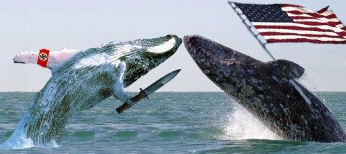 whale-wars-finale2